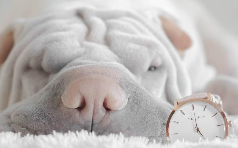 Mon chien a-t-il la notion du temps ?